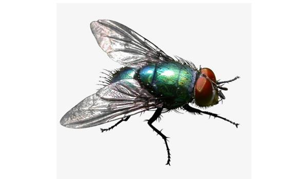 开封苍蝇消杀防治