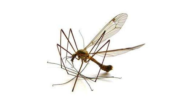 开封蚊子消杀防治